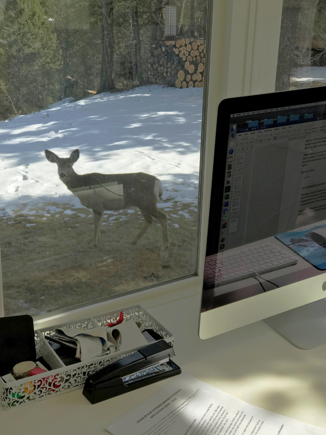deer outside office window, Invermere, B.C., March 17, 2020