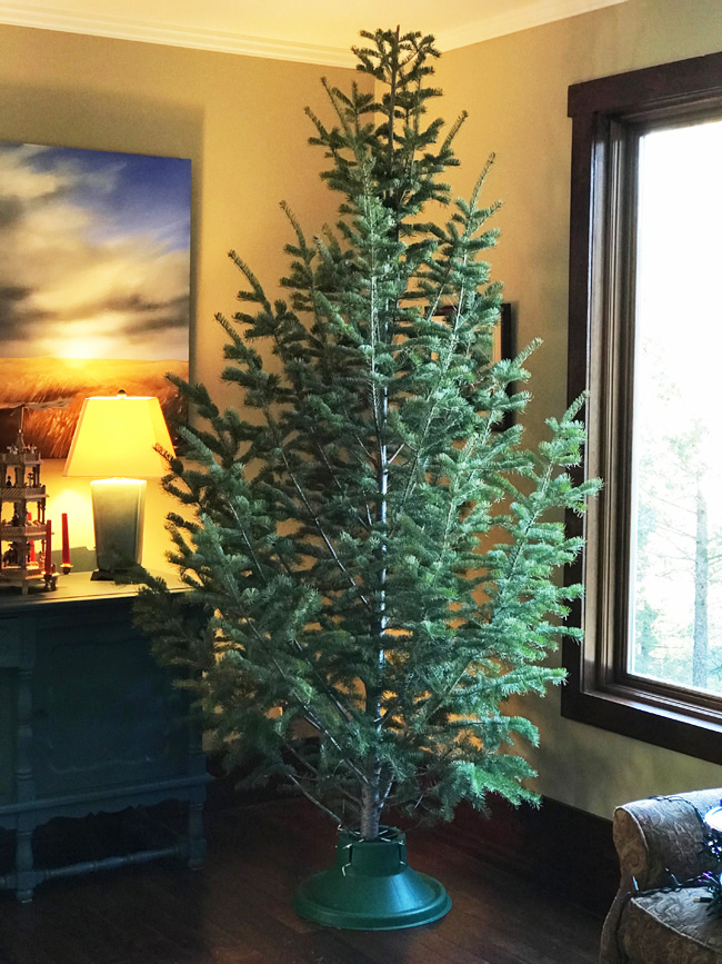 Traditional tree before decorations
