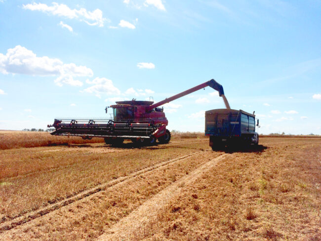 back to the farm, combine and truck in Saskatchewan wheat field
